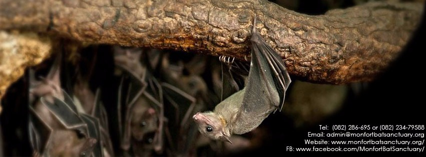 Monfort bat sactuary